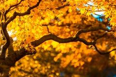 秋天树,非常浅焦点 免版税库存照片