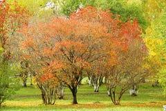 秋天树 图库摄影