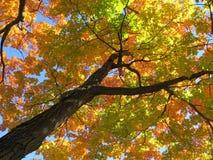 秋天树 库存照片