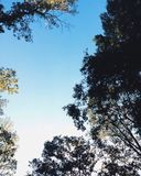 秋天树 免版税图库摄影