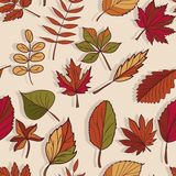 秋天样式 秋叶模式 林木红色,黄色和绿色叶子  无缝的纹理 用途作为填充模式, o 免版税库存照片