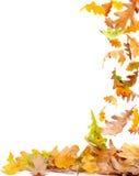 秋天框架叶子 库存图片