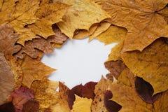 秋天框架叶子 免版税库存照片