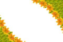 秋天框架叶子 图库摄影