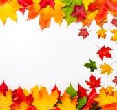 秋天框架构成由落的秋叶做成在白色 库存图片