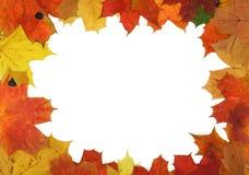 秋天框架槭树 免版税库存图片