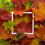 秋天框架由有白色框架的叶子制成 平的位置,顶视图 库存照片