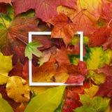 秋天框架由有白色框架的叶子制成 平的位置,顶视图 免版税库存图片