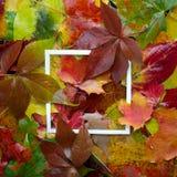 秋天框架由有白色框架的叶子制成 平的位置,顶视图 图库摄影