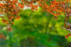 秋天框架背景 免版税库存照片
