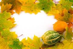 秋天框架 免版税库存照片