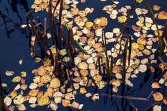 秋天桔子叶子 库存图片