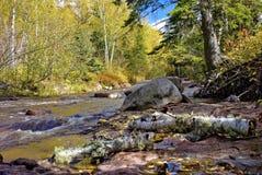 秋天桦树分行划分为的北美驯鹿小河 库存图片