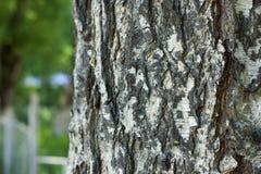 秋天桦树分行色的叶子树干 库存照片