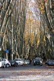 秋天桦树叶子草甸橙树 走Janiculum (罗马,意大利) 库存照片