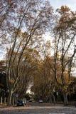 秋天桦树叶子草甸橙树 走Janiculum (罗马,意大利) 免版税库存照片