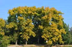 秋天桦树叶子草甸橙树 免版税库存照片