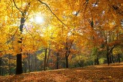 秋天桦树叶子草甸橙树 库存照片