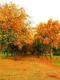 秋天桦树叶子草甸橙树 免版税库存图片