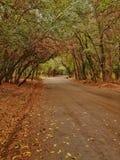 秋天桦树叶子草甸橙树 图库摄影