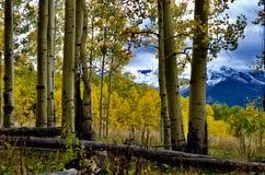 秋天桦树和Dibé Nitsaa,登上Hesperus,圣Juans,科罗拉多 免版税库存照片