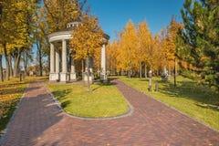 秋天桦树树丛的看法 库存图片