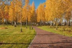 秋天桦树树丛的看法 免版税库存图片