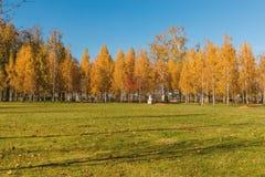 秋天桦树树丛的看法 免版税图库摄影