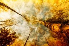 秋天桦树森林 免版税库存图片
