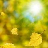 秋天桦树 免版税库存图片
