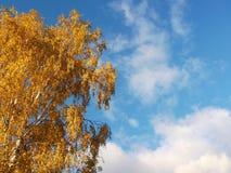 秋天桦树 免版税库存照片