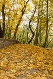 秋天森林。 库存照片