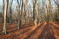秋天森林。 免版税图库摄影