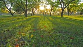 秋天森林。4K.充分的HD, 4096x2304。 股票视频