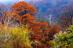 秋天森林上色1 免版税库存图片