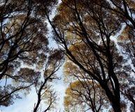 秋天森林上面,黄色叶子覆盖天空,剪影纹理 库存图片