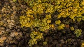 秋天森林与红色,黄色和绿色树的秋天风景鸟瞰图  免版税库存图片