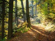 秋天森林做路径照片波兰 库存照片