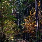秋天森林做路径照片波兰 免版税库存图片