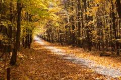 秋天森林公园在加拿大 免版税库存图片