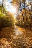 秋天森林公园在加拿大 免版税库存照片