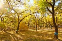 秋天森林公园 库存照片