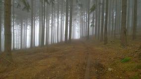 秋天森林公路,南波希米亚, Czechia看法  库存图片