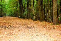 秋天森林公路 免版税图库摄影
