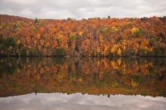 秋天森林反射 库存照片