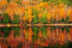秋天森林反映 免版税库存图片