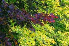 秋天森林叶子五颜六色的背景 免版税图库摄影