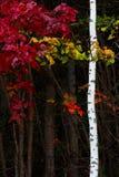 秋天森林叶子五颜六色的背景 库存图片