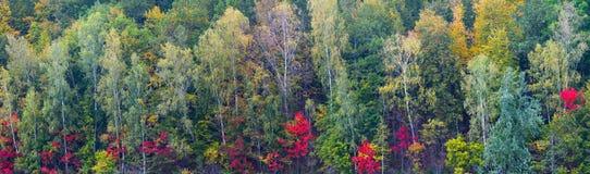 秋天森林叶子五颜六色的长的大全景背景 免版税库存图片