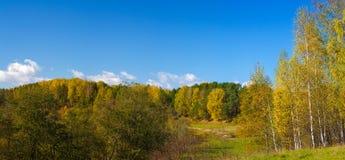 秋天森林叶子五颜六色的长的大全景背景 库存照片
